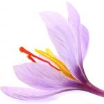 عکس عطر اورجینال با بوی زعفران