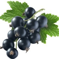 عکس عطر اورجینال با بوی انگور فرنگی سیاه