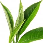 عکس عطر اورجینال با بوی چای
