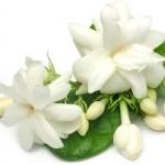عکس عطر اورجینال با بوی یاسمن