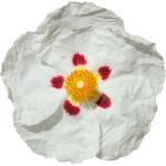 عکس عطر اورجینال با بوی لادن