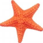 عطرهای دارای نت ستاره دریایی , عطرهایی با بوی ستاره دریایی , Perfumes with Starfish Note