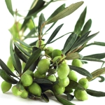 عطرهای دارای نت درخت زیتون , عطرهایی با بوی درخت زیتون , Perfumes with Olive Tree Note