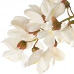 عکس عطر اورجینال با بوی گل اقاقیا