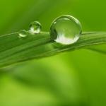 عکس عطر اورجینال با بوی  سبز