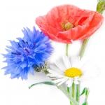 عکس عطر اورجینال با بوی گل های وحشی