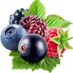 عطرهای دارای نت میوه های جنگلی , عطرهایی با بوی میوه های جنگلی , Perfumes with Forest fruits Note