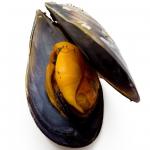 عطرهای دارای نت پوسته های دریایی , عطرهایی با بوی پوسته های دریایی , Perfumes with Sea shells Note