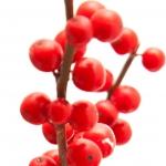عطرهای دارای نت نوعی تمشک زمستانی , عطرهایی با بوی نوعی تمشک زمستانی , Perfumes with Winterberry Note