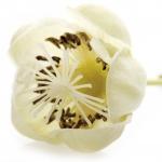 عطرهای دارای نت شکوفه کیوی , عطرهایی با بوی شکوفه کیوی , Perfumes with Kiwi blossom Note