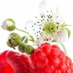 عطرهای دارای نت شکوفه تمشک , عطرهایی با بوی شکوفه تمشک , Perfumes with Raspberry blossom Note