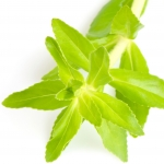 عطرهای دارای نت گیاه لیمونفیلا , عطرهایی با بوی گیاه لیمونفیلا , Perfumes with Limnophila aromatica Note