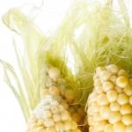 عطرهای دارای نت ابریشم گیاه ذرت , عطرهایی با بوی ابریشم گیاه ذرت , Perfumes with Corn Silk Note