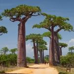 نمایش عطرهای دارای باباب - Baobab