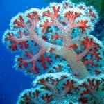 عطرهای دارای نت صخره مرجانی , عطرهایی با بوی صخره مرجانی , Perfumes with Coral Reef Note