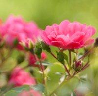 عطرهای دارای نت گلها , عطرهایی با بوی گلها , Perfumes with flowers Note